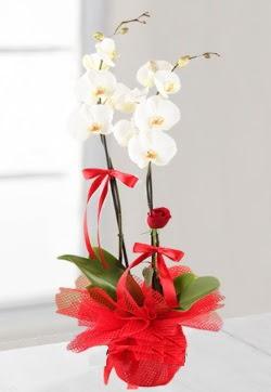 2 dallı beyaz orkide ve 1 adet kırmızı gül  Ankara anneler günü çiçek yolla