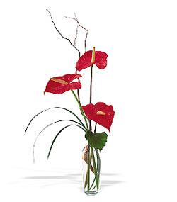 Ankara lalegül çiçek siparişi sitesi  cam yada mika Vazoda 3 adet  antoryum