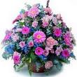 karisik mevsim kir çiçekleri  Ankara ostim çiçek gönderme sitemiz güvenlidir