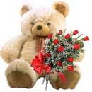 kocaman ayicik ve 10 gül   Ankara etimesgut çiçek , çiçekçi , çiçekçilik