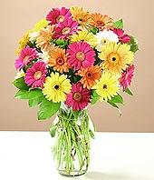 Ankara bilkent çiçek online çiçek siparişi  17 adet karisik gerbera