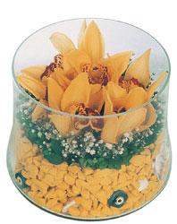 Ankara macunköy çiçekçiler  cam fanus içerisinde 3 adet kandil orkide
