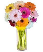 Ankara şentepe internetten çiçek siparişi  Farkli renklerde 15 adet gerbera çiçegi