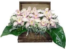 Ankara demetevler ucuz çiçek gönder  sandik içerisinde 1 dal orkide
