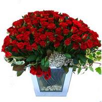Ankara macunköy çiçekçiler   101 adet kirmizi gül aranjmani