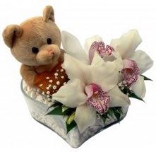 Ankara batıkent çiçek yolla  15 cm boyutlarinda ayicik ve 1 kandil orkide