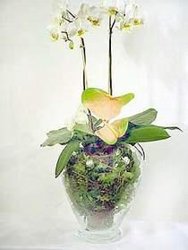 Ankara gimat çiçek satışı  Cam yada mika vazoda özel orkideler