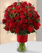 75 adet kırmızı gül çiçeği