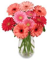 vazo içerisinde 13 adet gerbera çiçeği  Ankara lalegül çiçek siparişi sitesi