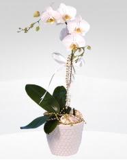 1 dallı orkide saksı çiçeği  Ankara online çiçekçi , çiçek siparişi