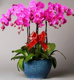 7 dallı mor orkide  Ankara bilkent çiçek online çiçek siparişi