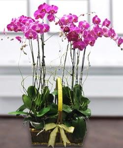 4 dallı mor orkide  Ankara kardelen güvenli kaliteli hızlı çiçek