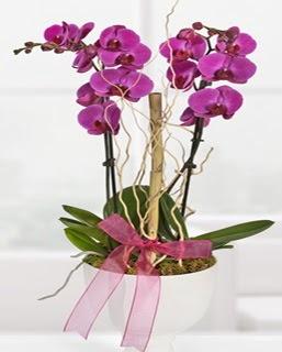 2 dallı nmor orkide  Ankara anneler günü çiçek yolla