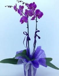 2 dallı mor orkide  Ankara ergazi kaliteli taze ve ucuz çiçekler