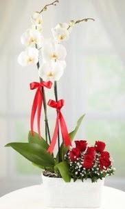 2 dallı beyaz orkide ve 7 kırmızı gül  Ankara ivedik hediye çiçek yolla