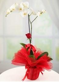 Tek dal beyaz orkide tek dal kırmızı gül  Ankara karacakaya internetten çiçek satışı