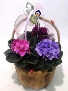 Sepet içerisinde 3 adet menekşe  Ankara anneler günü çiçek yolla