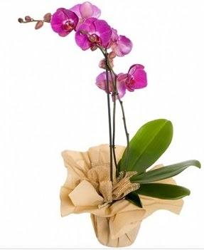 Tek dal mor orkide  Ankara ostim çiçek gönderme sitemiz güvenlidir
