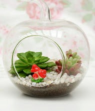 Küçük elma terrarium 3 kaktüs  Ankara yenimahalle online çiçek gönderme sipariş