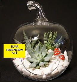 5 kaktüslü Elma terrarium orta boy  Ankara yenimahalle online çiçek gönderme sipariş