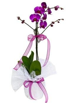 Tek dallı mor orkide  Ankara eryaman çiçekçi telefonları