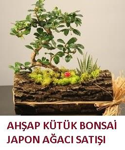 Ahşap kütük içerisinde bonsai ve 3 kaktüs  Ankara gazi mahallesi çiçekçi mağazası
