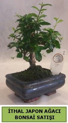 İthal japon ağacı bonsai bitkisi satışı  Ankara eryaman çiçekçi telefonları