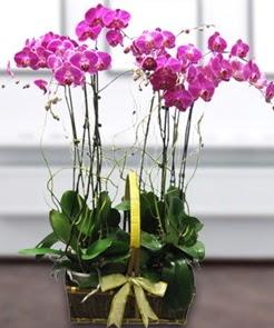 7 dallı mor lila orkide  Ankara ostim çiçek gönderme sitemiz güvenlidir
