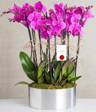 11 dallı mor orkide metal vazoda  Ankara ostim çiçek gönderme sitemiz güvenlidir