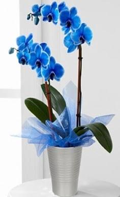Seramik vazo içerisinde 2 dallı mavi orkide  Ankara etimesgut çiçek , çiçekçi , çiçekçilik