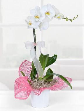 Tek dallı beyaz orkide seramik saksıda  Ankara sincan çiçek gönderme