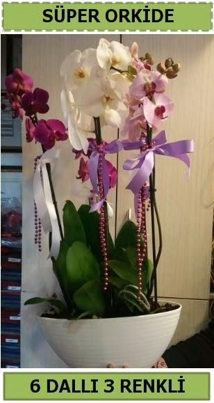6 dallı 3 renk özel vazoda orkide çiçeği  Ankara gimat çiçek satışı