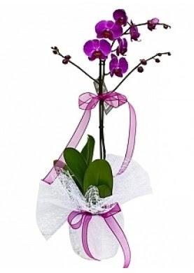 Tekli Mor Orkide  Ankara batıkent çiçek yolla