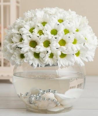 Fanusta beyaz Papatya  Ankara gimat çiçek satışı