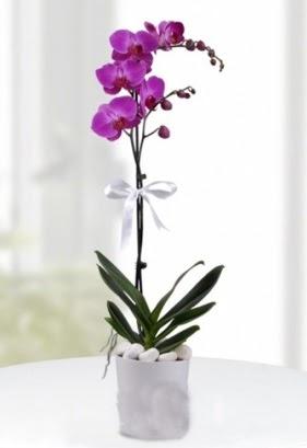 Tek dallı saksıda mor orkide çiçeği  Ankara macunköy çiçekçiler
