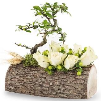 Doğal kütükte bonsai ağacı ve 7 beyaz gül  Ankara ostim çiçek gönderme sitemiz güvenlidir
