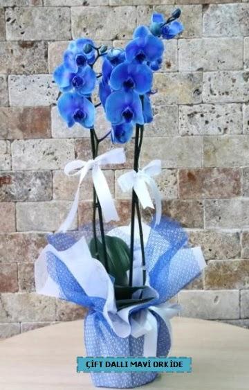 çift dallı ithal mavi orkide  Ankara batıkent çiçek yolla